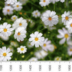 skin_flora_0311